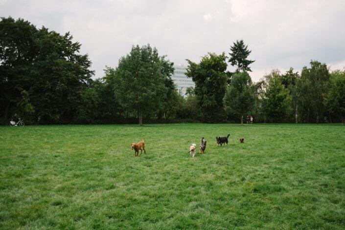 Urlaub mit Hund in Köln